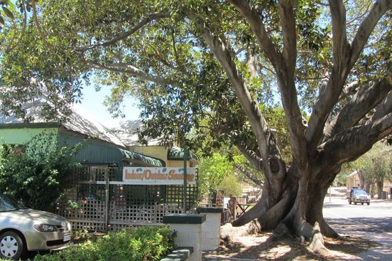 The Season Tree - Lightning Ridge Tourism