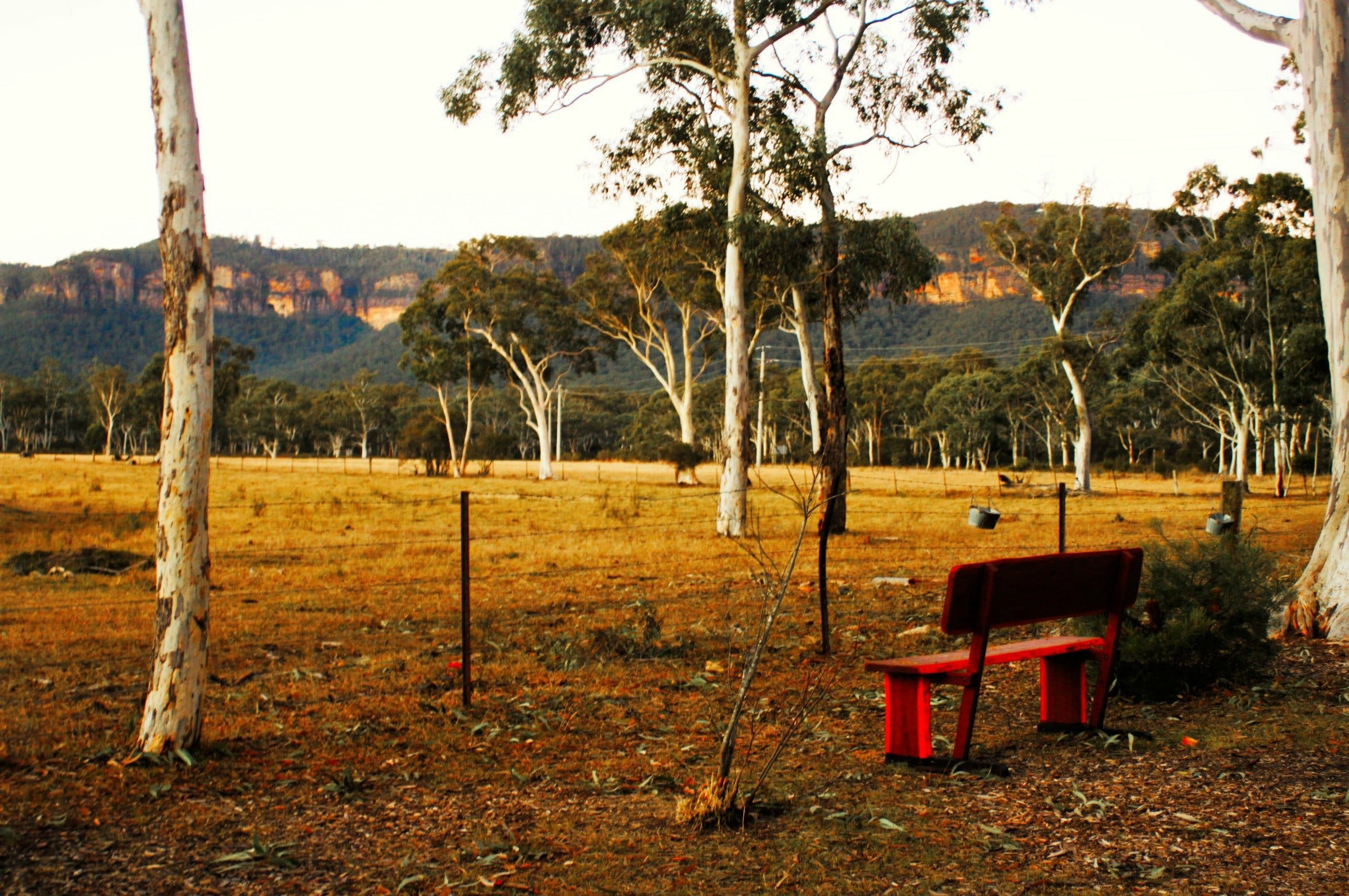 The Megalong Valley Tearooms - Lightning Ridge Tourism