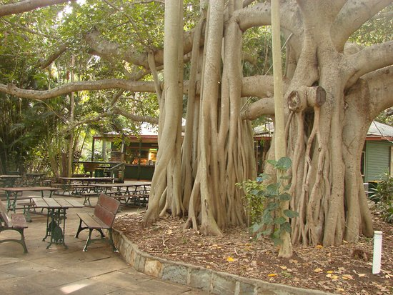 Gardens Tearooms - Lightning Ridge Tourism